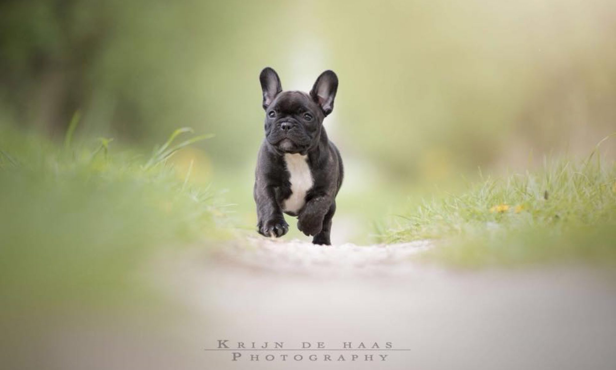 FrenchieFun